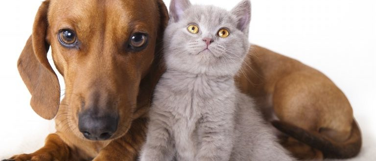 dogs-and-cats-images