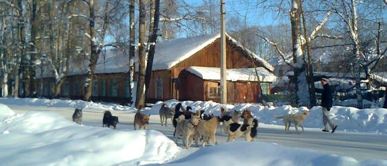собаки в Емве