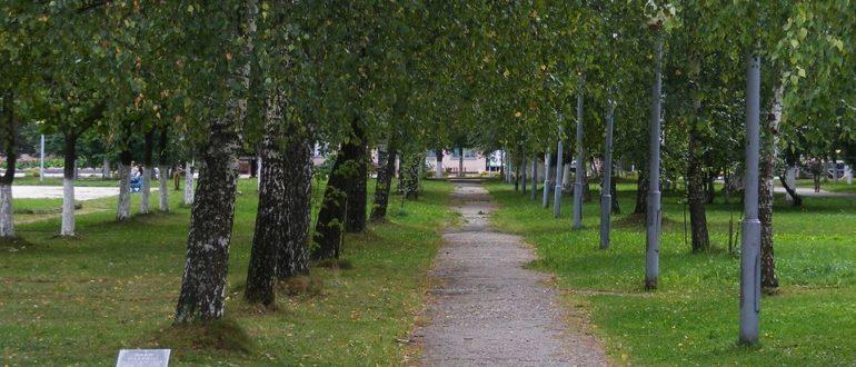 Республика Коми подключится к Всероссийской акции «Сад памяти»